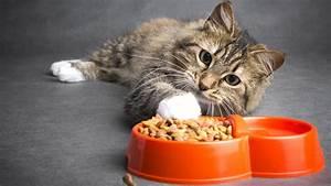 Verkleidung Für Katzen : stiftung warentest katzenfutter gutes trockenfutter muss nicht teuer sein ~ Frokenaadalensverden.com Haus und Dekorationen