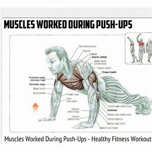 Muscle And Chest Muscles On Pinterest