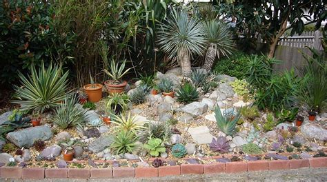 succulent flower bed spiky obsession the hardy succulent garden climate