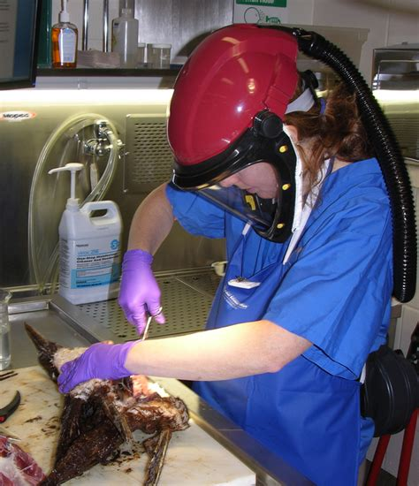 CSI For Animals: How An Oregon Lab Practices Forensics ...
