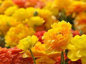 Yellow, Red, Flowers, Photos, Ultra, Hd, Wallpapers, 3840x2400, Wallpapers13, Com