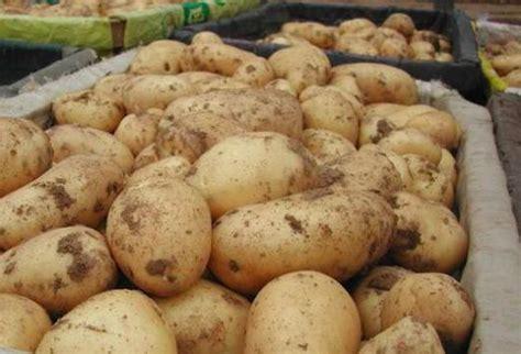 Kādi pārtikas produkti satur ogļhidrātus?