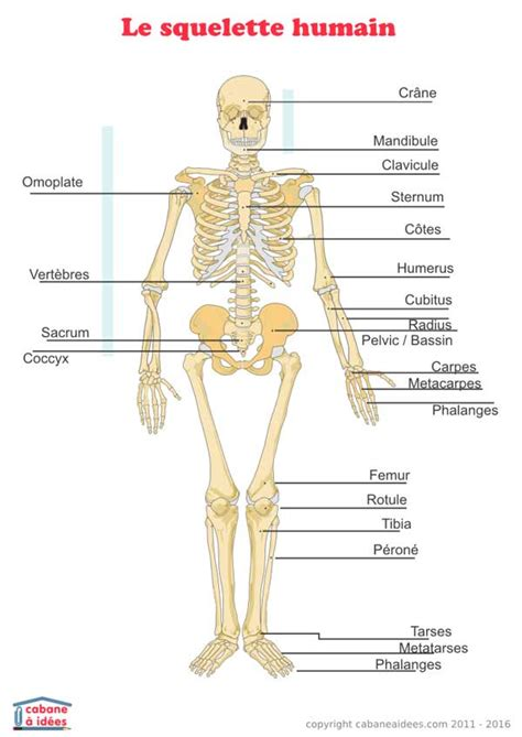 cuisiner avec des enfants squelette humain schéma cabane à idées