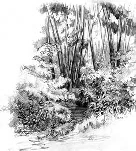 Forest Landscape Sketches