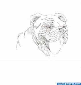 Learn How to Draw 7 Different Types of Dogs - Traditional ...