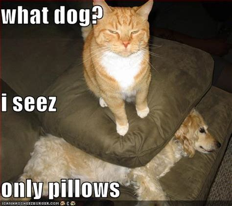 Latest Funny Pictures Funny Dogs And Cats Together