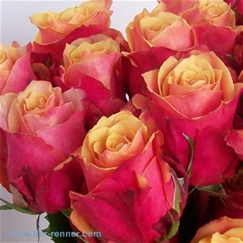 So Finden Sie Die Passende Rosensorte by Cherry In Orange 20 St 252 Ck Blumen F 252 R Hotel