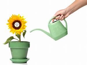 Sonnenblume Im Topf : sonnenblumen im topf pflegen so gedeihen sie bestens ~ Orissabook.com Haus und Dekorationen