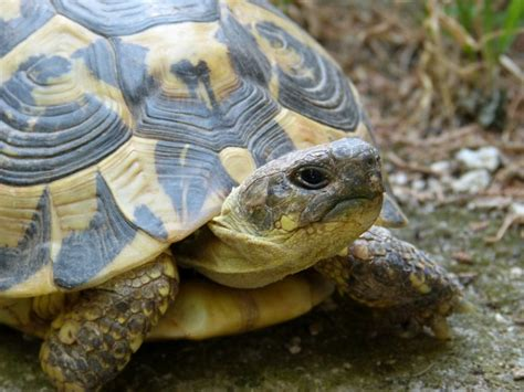 do turtles shed their shells why do turtles shells paleontologists shed new light