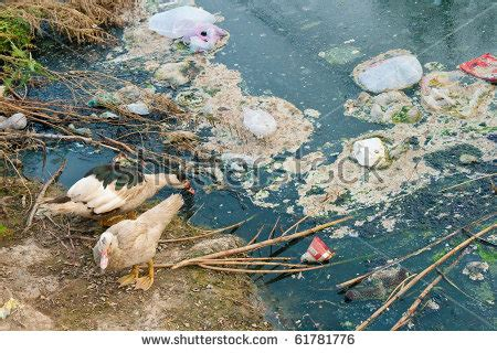 water pollution stock  images pictures