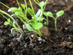 Schimmel In Pflanzen : schimmel im blumentopf 6 tipps die helfen ~ Bigdaddyawards.com Haus und Dekorationen