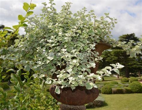 plante exterieur en pot sans entretien plantes pour jardini 232 res peu gourmandes en arrosage