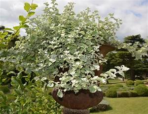 Plante Balcon Facile D Entretien : plantes pour jardini res peu gourmandes en arrosage ~ Melissatoandfro.com Idées de Décoration