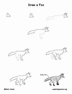 How To Draw An Arctic Fox Step By Step