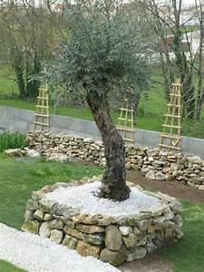 Planter Un Olivier En Pot : olivier en pot beautiful petit olivier hauteur cm pot ~ Dailycaller-alerts.com Idées de Décoration