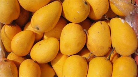 8 Types Of Mangoes Which You Must Try This Summer Season
