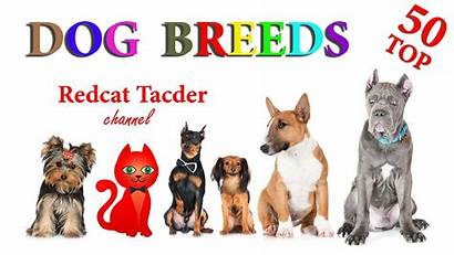 Dog Breeds Dogs Breed