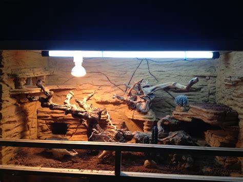 decor terrarium desertique teciverdi
