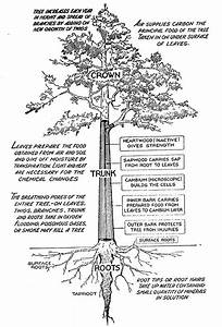 Learn The Basics Of Tree Structure