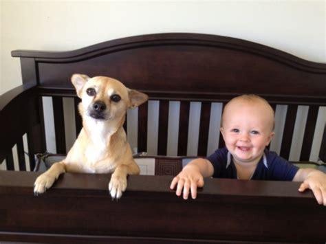 Glueckliche Haustiere Was Hunde Brauchen by Design Ideen 6 Praktische Tipps F 252 R Gl 252 Ckliche Haustiere