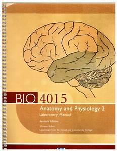 Bio 4015 Anatomy And Physiology 2 Laboratory Manual  7e