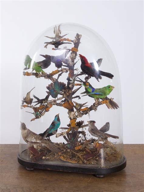 taxidermy birds drew pritchard