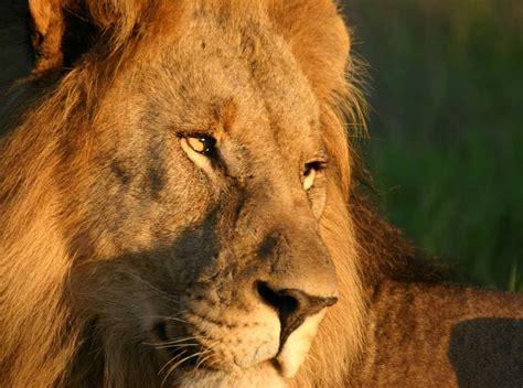 jamala madikwe royal safari lodge madikwe game reserve south africa
