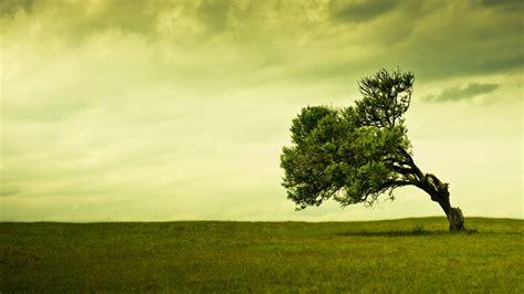 comment redresser  arbre qui penche arboplus