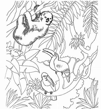 Coloring Pages Animals Zoo Sloth