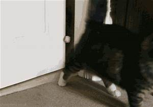 Cat Grabbing GIF - Find & Share on GIPHY