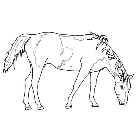 paint horse grazing coloring page  printable