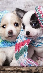 60 Cute Animals iPhone Wallpapers You Would Love to ...