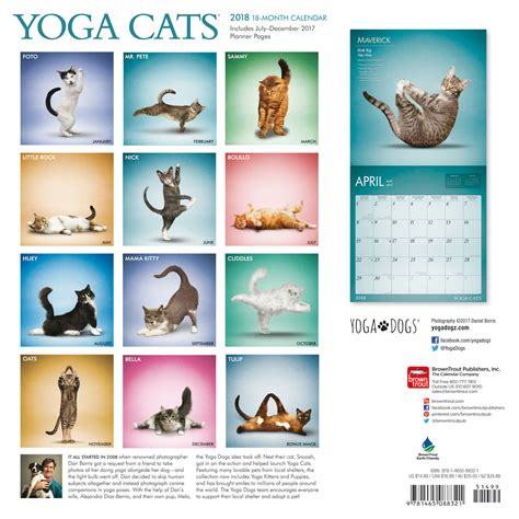 yoga cats calendars ukposterseuroposters