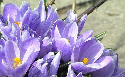 Love lives in the garden...: Diena pie ezera