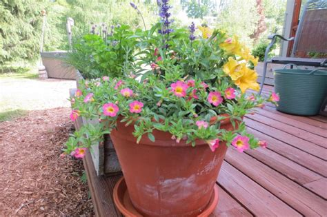 5 Secrets To Successful Container Gardening  Toronto Star