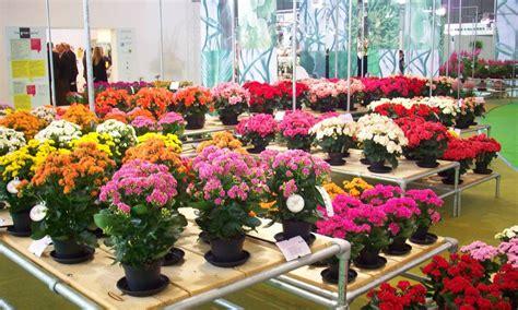 bisnis tanaman hias bunga hias menguntungkan bisnis