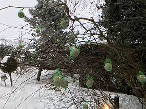 Vögel Füttern Ab Wann : dominik eulberg hat mir erkl rt wie du v gel im winter richtig f tterst thump ~ Frokenaadalensverden.com Haus und Dekorationen
