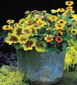 Best, Flower, Combinations, For, Containers