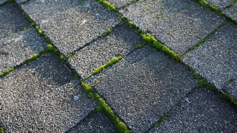 Moss Removal & Moss Treatment Tampa Roof Cleaning Repair Pittsburgh North West Roofing Pictures Of Roofs Cedar Company Red Inn Boston Logan How To Bid A Job 1st Choice