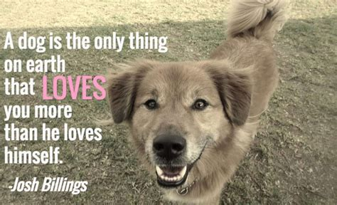 dog quotes  pictures