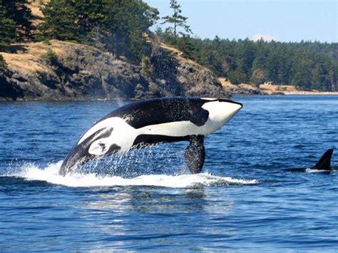 Seattle, San Juan Islands, Victoria