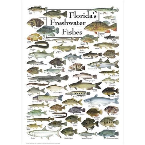 floridas freshwater fishes poster earth sky water