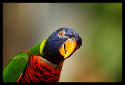 Die Schönste Farbe Der Welt by Die Sch 246 Nsten Tiere Tierbilder Der Welt Allmystery