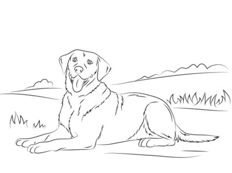 labrador retriever coloring page  printable coloring