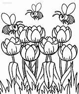 Coloring Tulip Printable Tulips Abeilles Primavera Tulpen Colouring Malvorlagen Sheets Coloriage Adult Envolent Tulipes Templates Template Vase Druckbare Tulpe Ausmalbilder sketch template