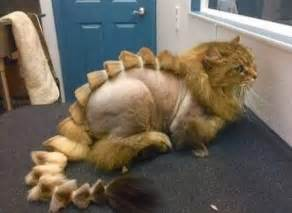 how to shave a cat pet grooming would my cat like a dinosaur cause