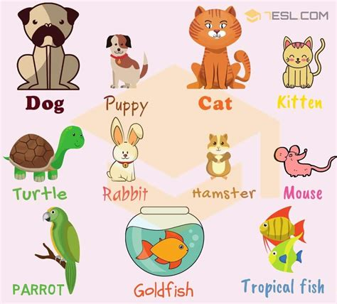 Pet Names: List Of Pets & Types Of Pets With Pictures 7