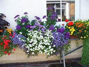 Herbstliche Blumenkästen Bilder : fotos von euren fensterbank blumenk sten seite 1 ~ Lizthompson.info Haus und Dekorationen