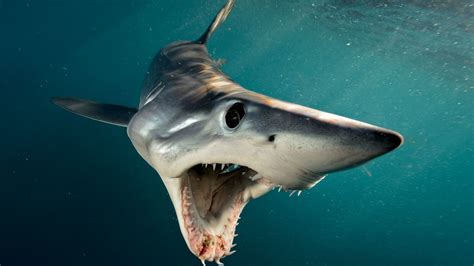 Images Of Sharks Take A Look At The Best Book For Shark Week Shark By