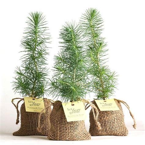 Pine Tree Plant Favor Burlap Pouch Cute Ideas